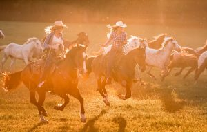 In Colorado, Cowgirls Drive the Horses in from the Fields on their Ranch. Modern Cowgirls wear Tough Jeans and Work Wear.