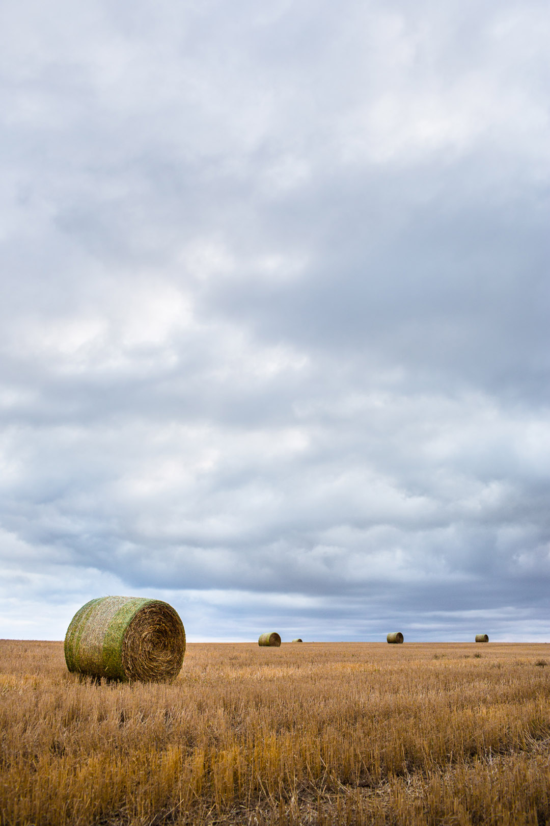 Hay Bails In A Field In Colorado
