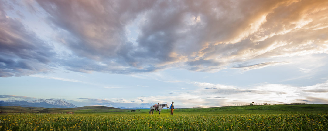 A Man And A Horse In A Field At Sun Set