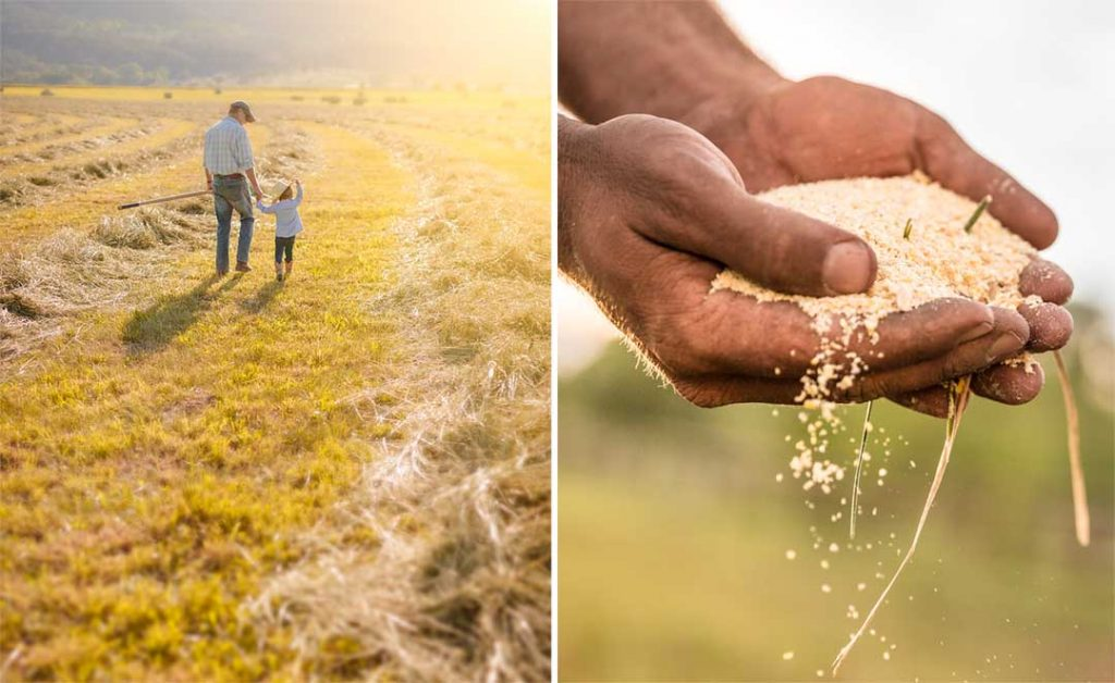 A Rancher And His Son Walk In A Field During Sunset On Their Ranch