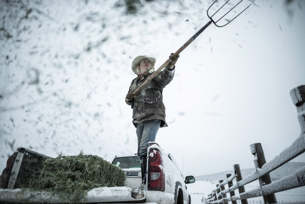 A Woman Moving Hay Around To Feed Cattle On Her Ranch