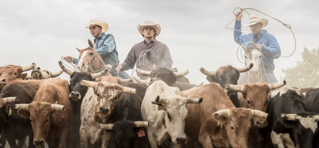 Wrangler Athletes Rope Cattle For A Lifestyle Shoot.