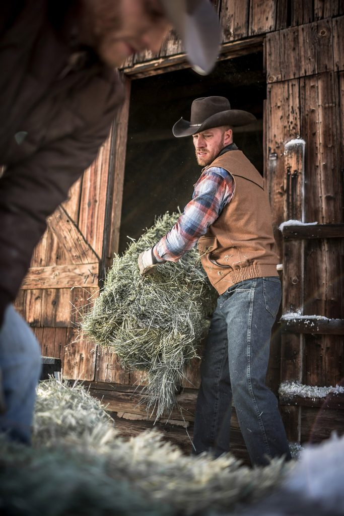 Men On The Ranch Throw Hay Bails Around To Feed The Cattle.
