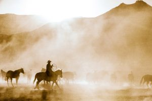 Cowboys Ride Horses At Sunset