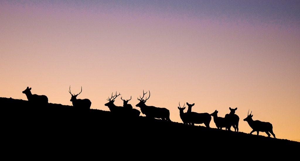 Elk, mule deer and pronghorn antelope hunting at Elkhorn Lodge near Craig, CO. A Hunter's Paradise.
