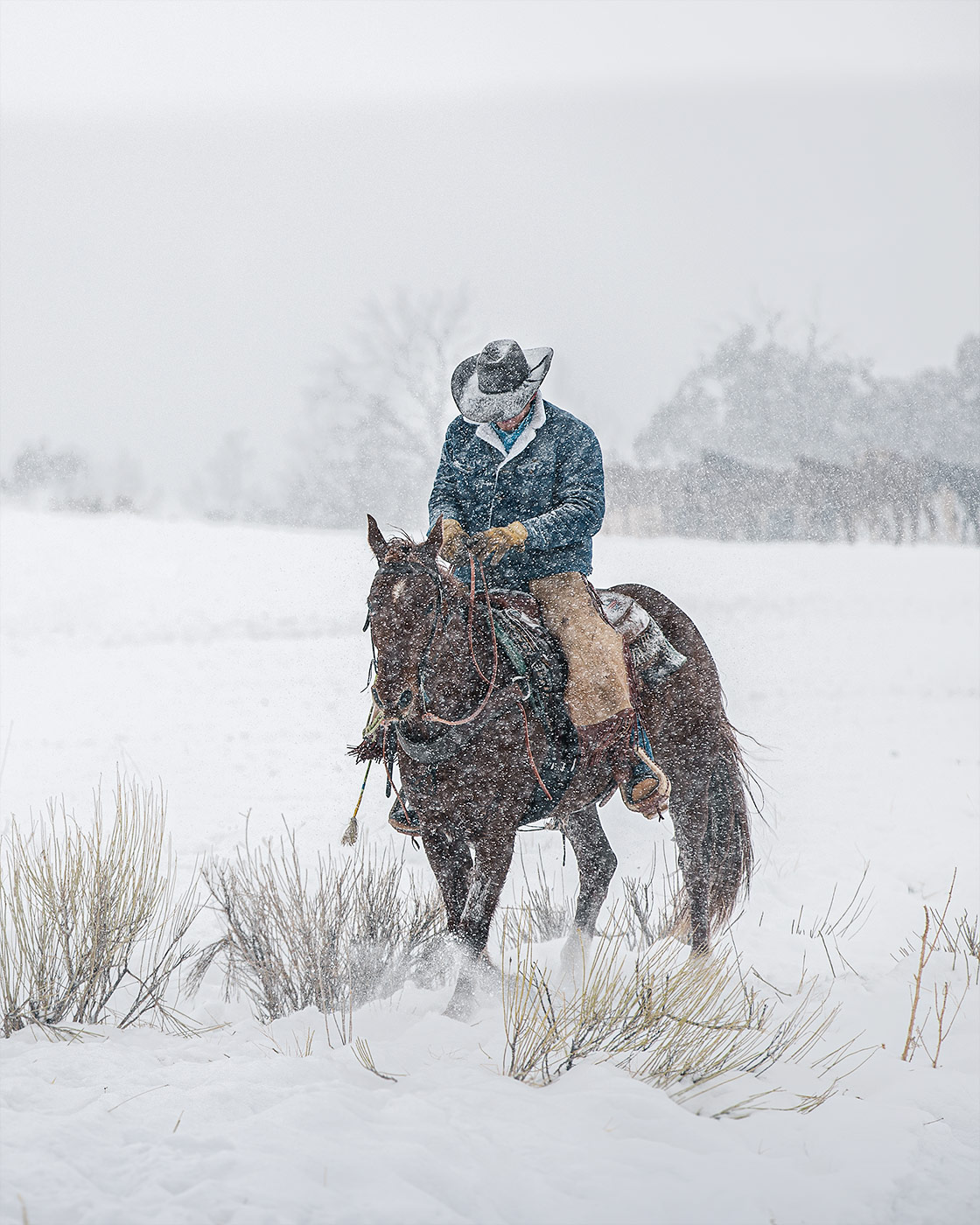 A lone cowboy sits on his horse during a snowstorm in Colorado